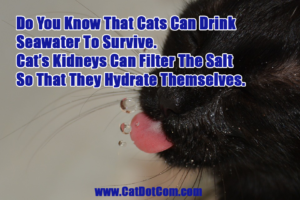 Can Cats Really Drink Seawater